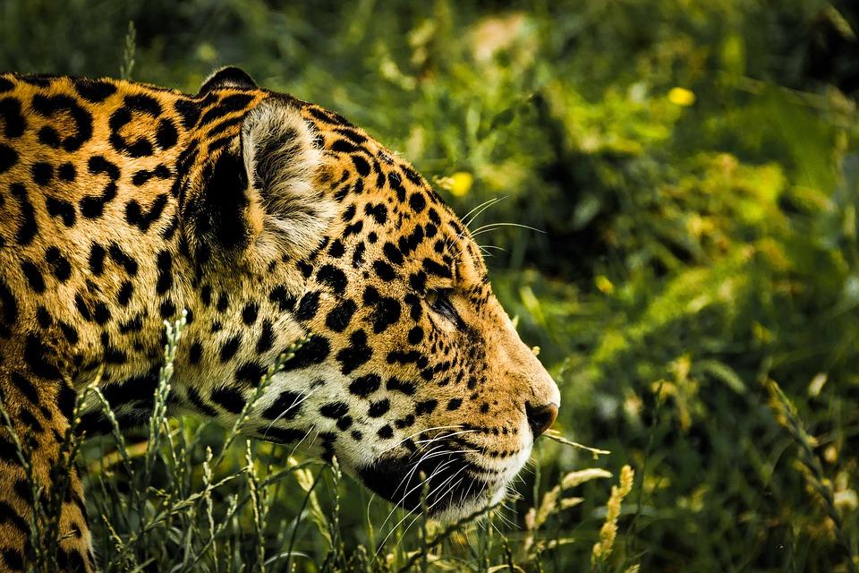 Lugares mais inusitados no Brasil - Pantanal