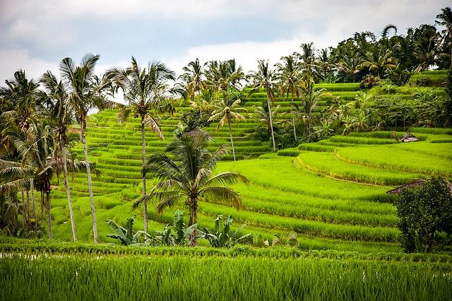 melhores destinos da indonésia campos de arroz