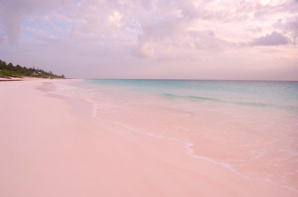 praias mais lindas do mundo pink sands beach
