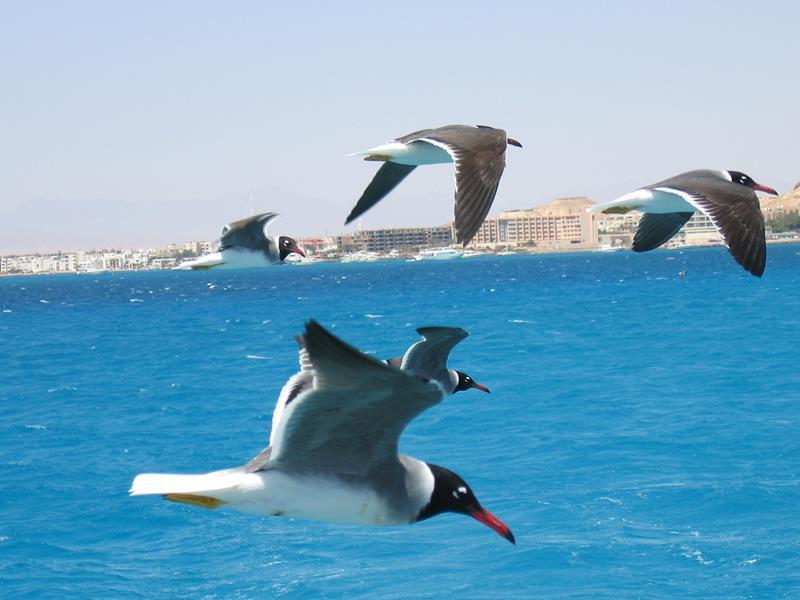 banhada pelo Mar Vermelho, Hurghada é um dos melhores destinos do Egito