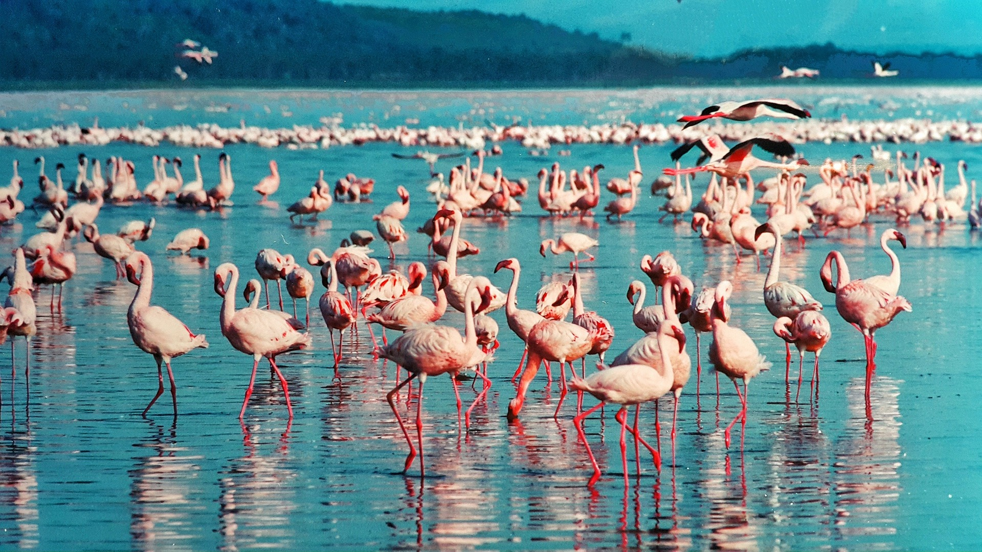 Lago repleto de flamingos
