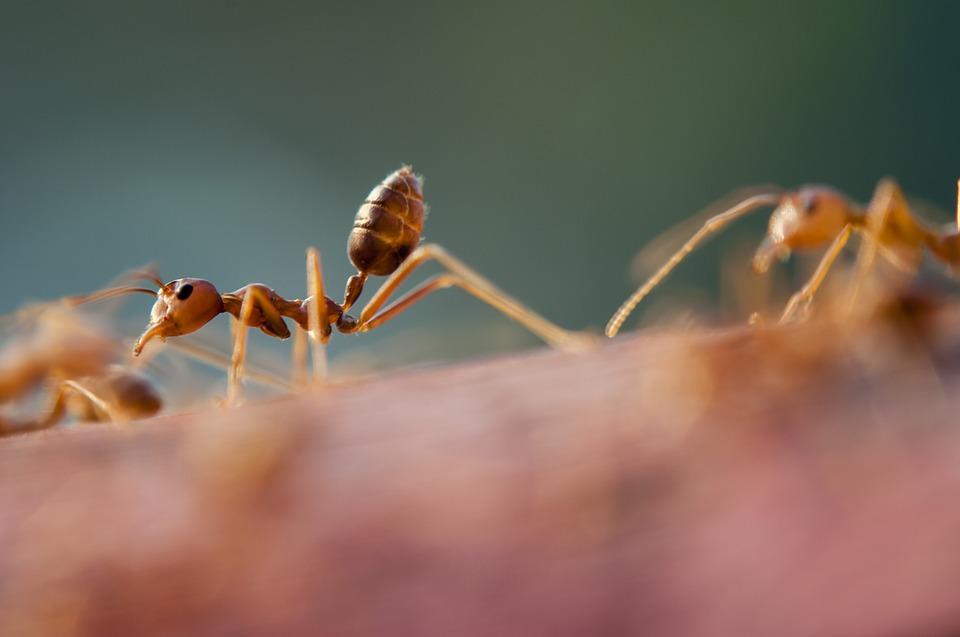 formigas - culturas mais bizarras do mundo