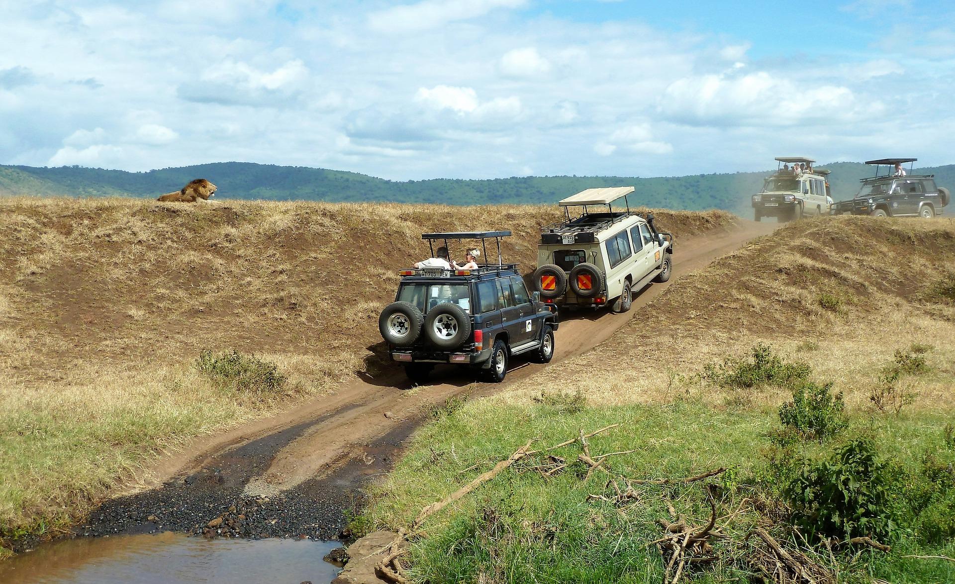 Safári na África de carro