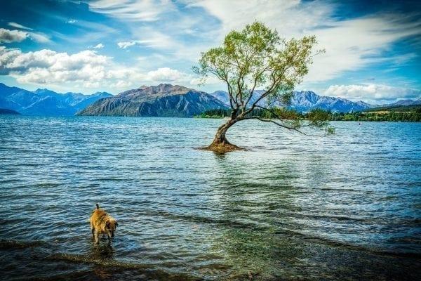 Turismo na Nova Zelândia: O que fazer em 2017?