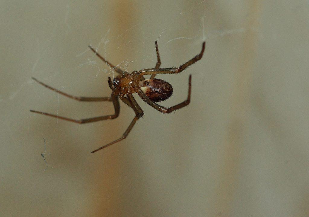 Aracnofobia fobia de aranhas