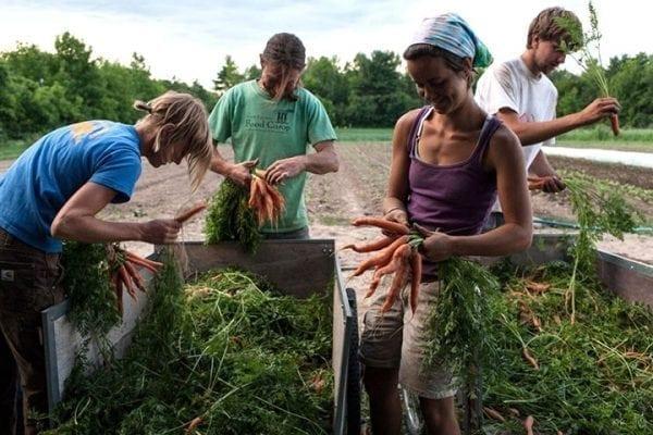 Você já pensou em fazer trabalho voluntário no exterior?