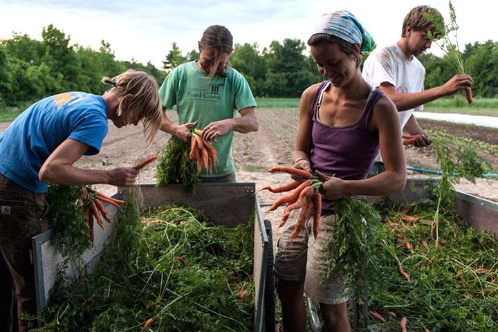 fazendas orgânicas trabalho voluntário no exterior