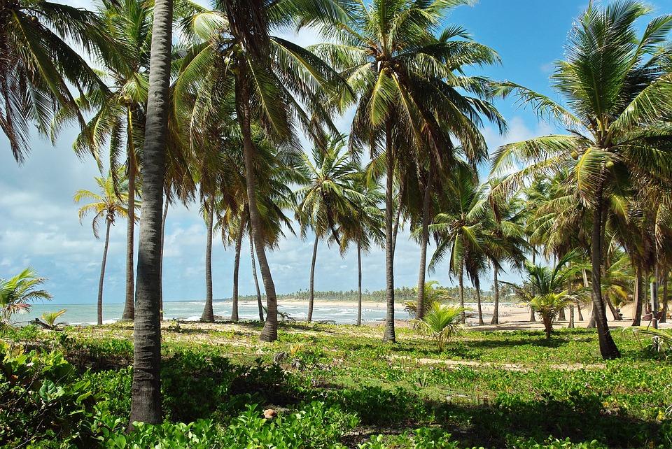 belezas naturais das praias do Nordeste brasileiro