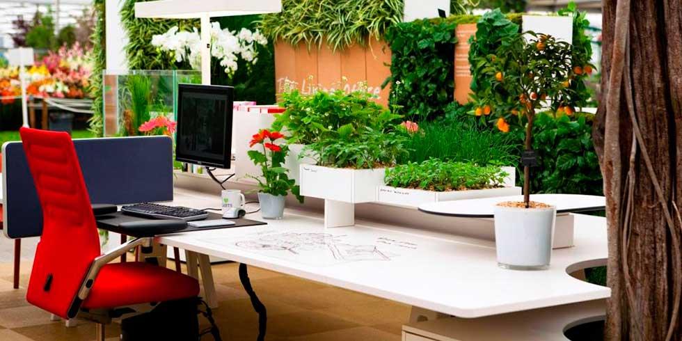 cuidar de plantas escritório
