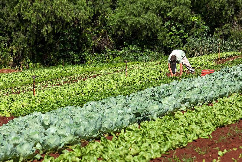 ideias para ganhar dinheiro cultivando a terra
