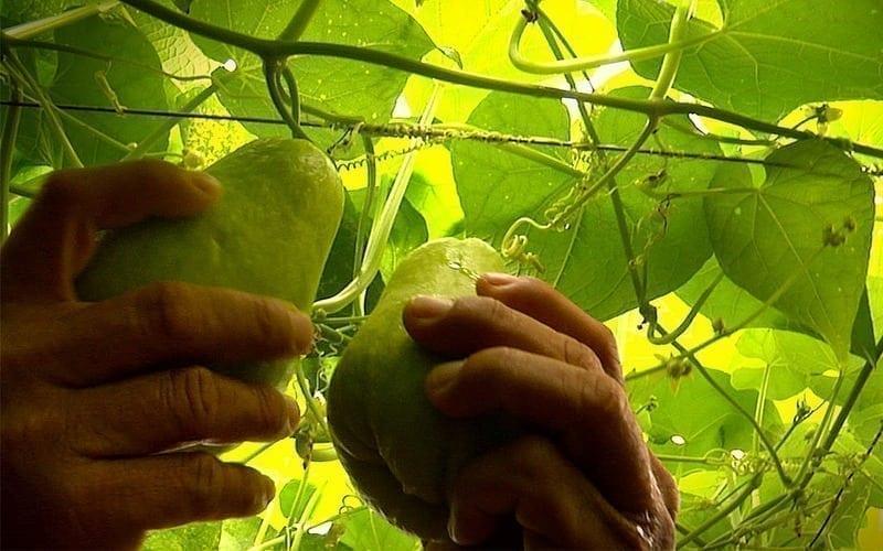 produtos orgânicos em alta