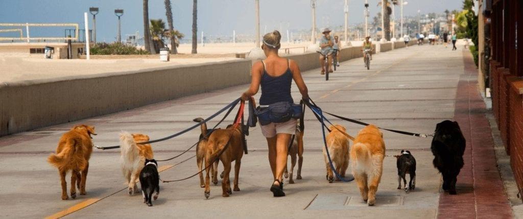 Pedir para ser indicado para passear com cachorros é o jeito mais fácil de conseguir esse extra