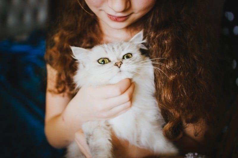 serviços para animais de estimação