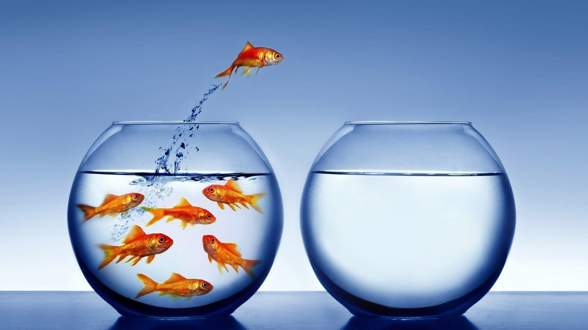 empreendedorismo é nada contra a maré 3
