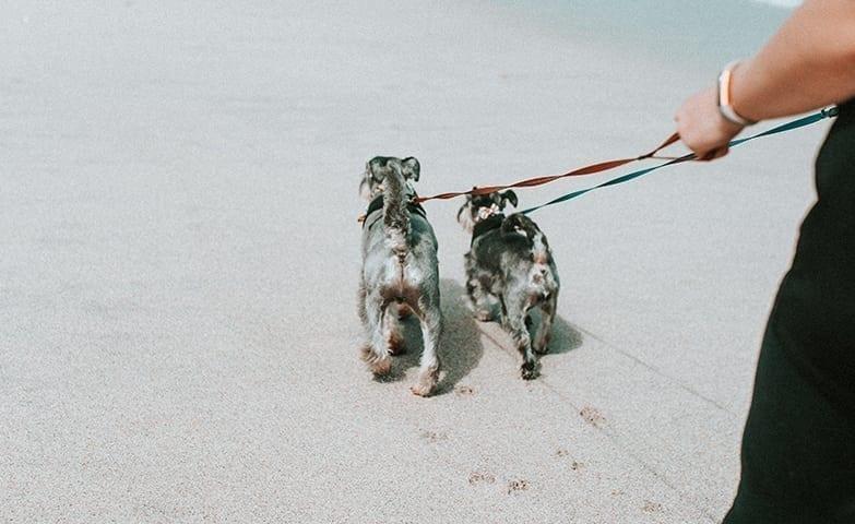 Um passeio com cachorros é uma forma de renda extra